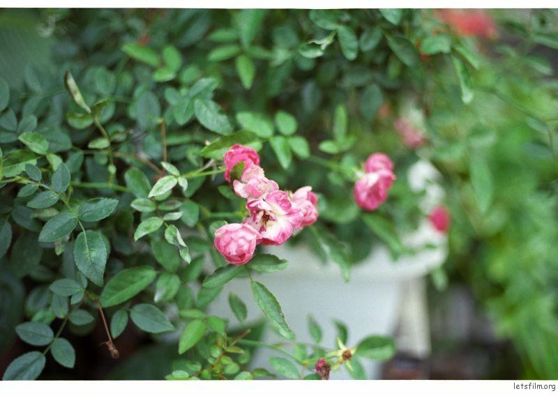 南宁胶片扫街,器材:Nikon F3T+leica 35mmF2