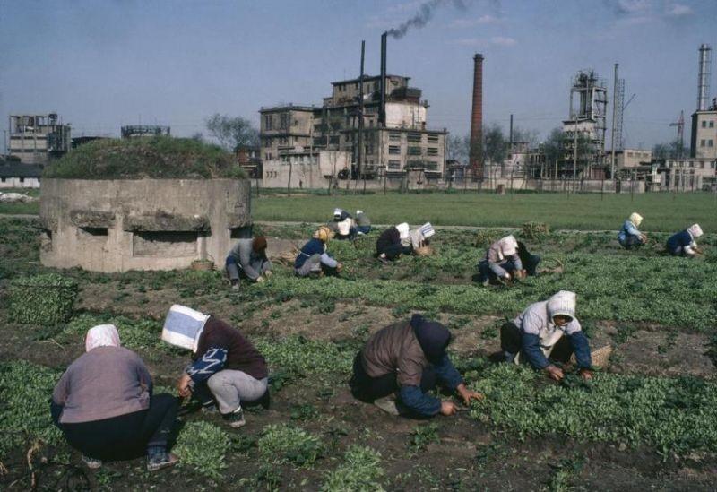上海郊区,公社社员正在劳作,他们身后的圆形建筑是国民党的碉堡