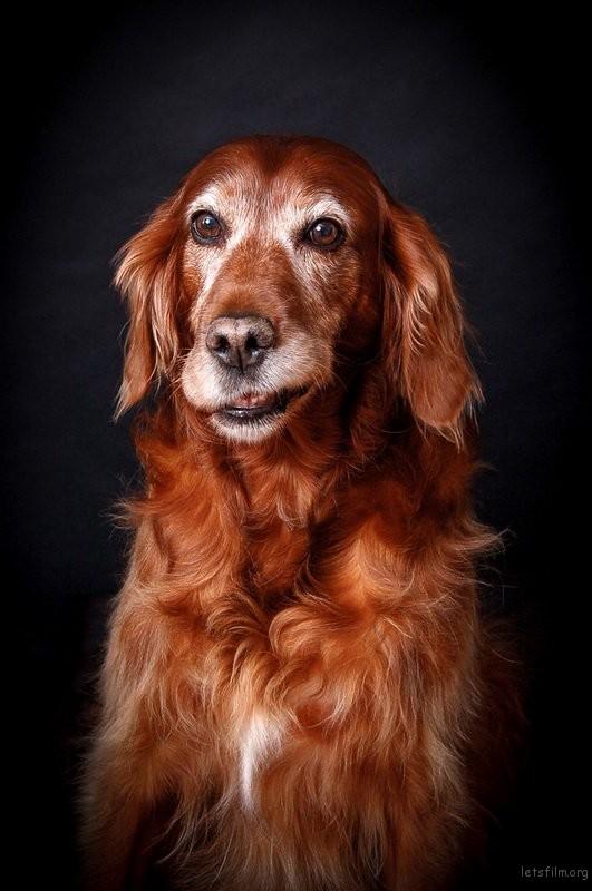 doggy02