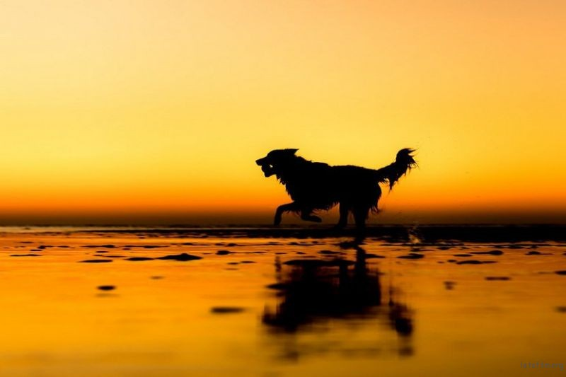 doggy03