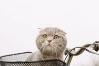 [14302] 黏黏是只猫