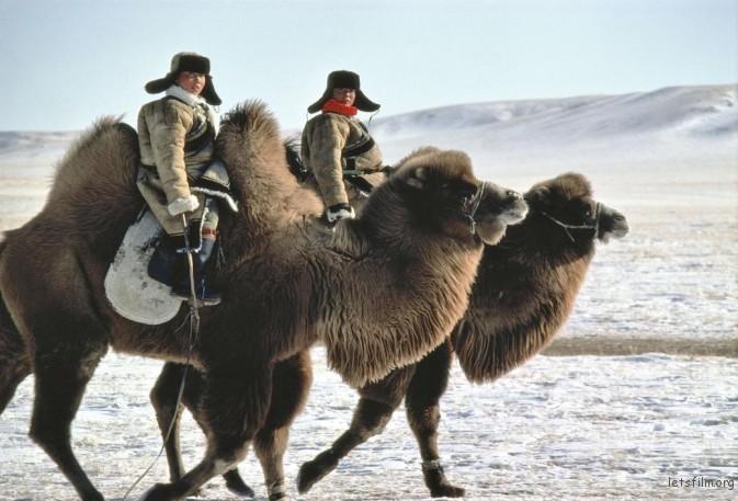 1982年,内蒙古自治区,骑着骆驼的男孩