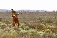 第三届「搞笑野生动物摄影奖」参赛作品精选