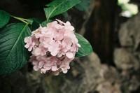 [14755] 春夏