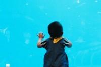 [14680] 带小外甥去海底世界 SEA