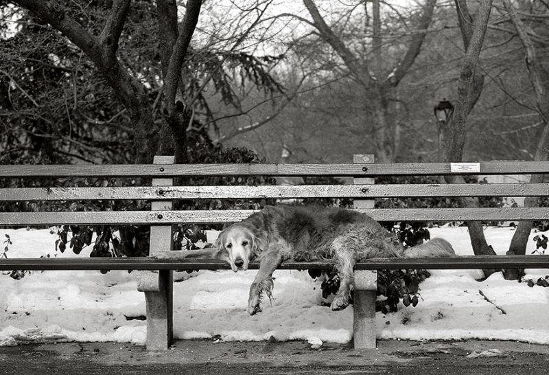 Cooper, 15 Years Old New York City, New York