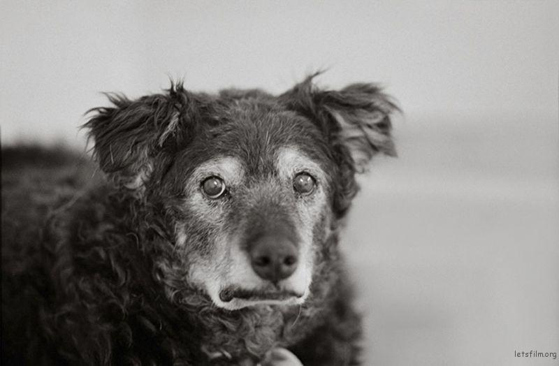 Curley, 14 Years Old, Kanab, Utah, Best Friends Animal Society