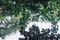 [15403] 被绿色覆盖的杭州