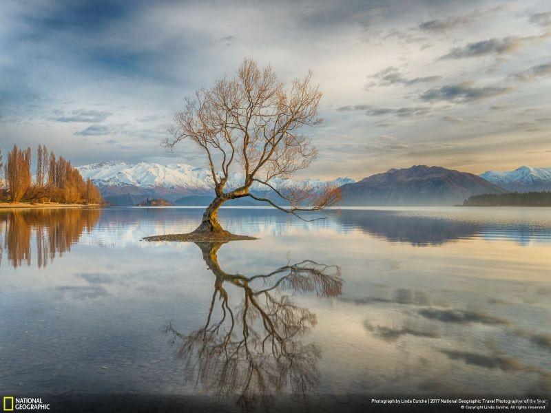 摄影师︰ Linda Cutche 作品名称:Wanaka Tree(新西兰)