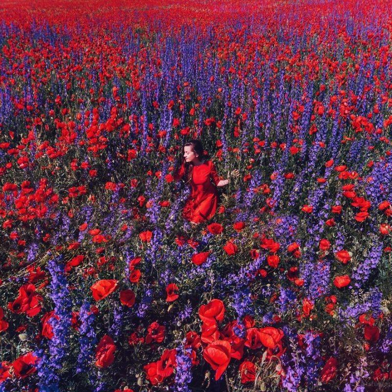 Poppies And Delphinium Field, Crimea