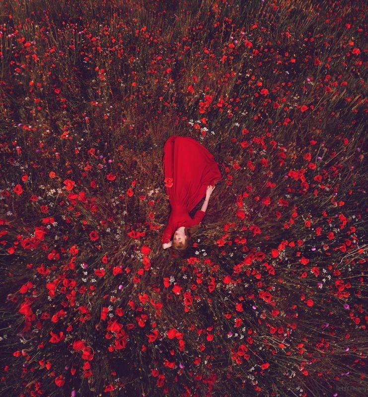 Poppies Field, Crimea