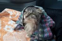 他在路边看到一只冻僵的小猫,不可思议的救活了了它