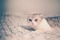 [15595] 猫咪物语