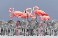 BPOTY 2017 年度鸟类摄影师比赛获奖作品