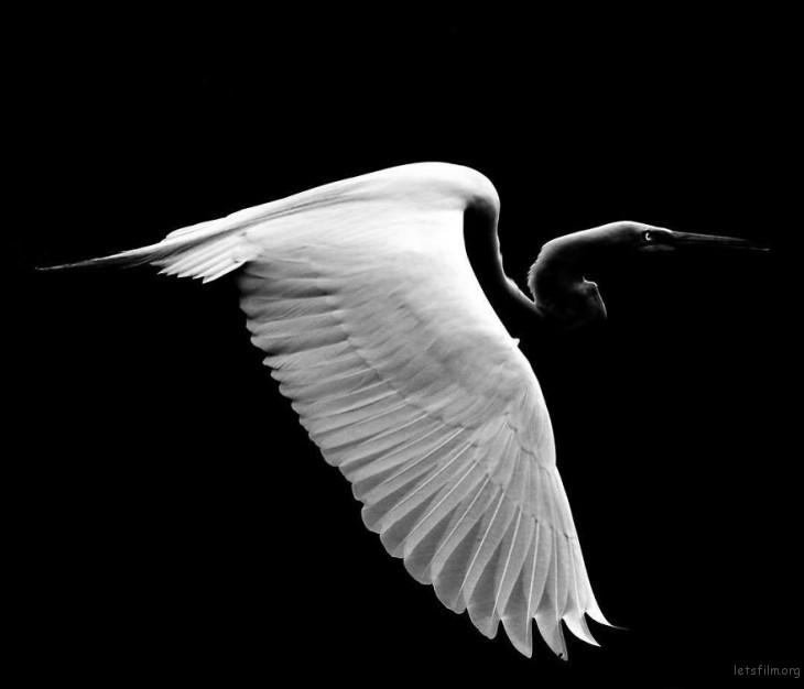 Photo by Robert Irwin