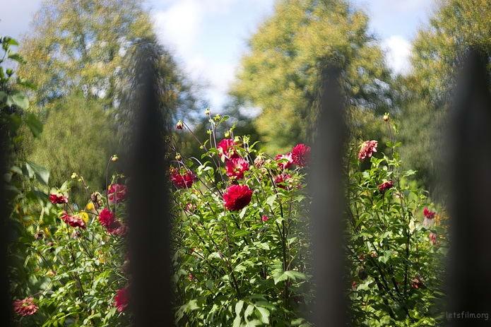 Oprema Jena Biotar 58mm f/2 样片