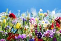 浓烈而奔放,摄影师蜷川实花的花言花语
