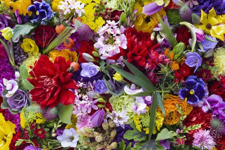 earthly-flowers_3826-750x500