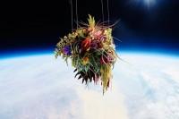 你和一朵花一样独一无二!东信突破时间和空间的经典花艺作品。