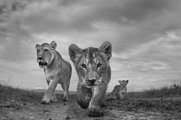 """The Mara"" by Anup Shah. Black & White Series of the Year 2017"