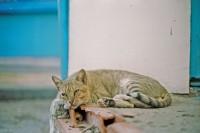[16137] 突尼斯的猫