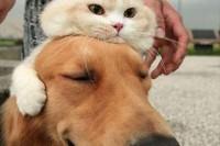 【猫奴的日常】到哪都是本喵的天下,5个让奴才无奈的瞬间,看到那萌萌样立马一秒原谅啊