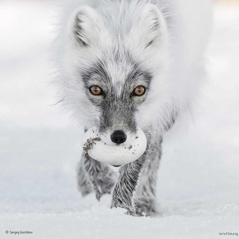 Arctic treasure ©Sergey Gorshkov