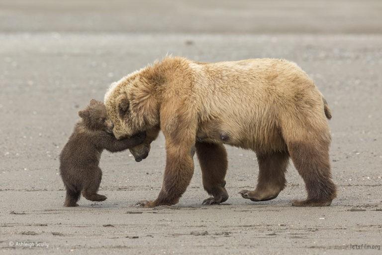 Bear hug,©Ashleigh Scully