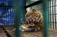 BBC 年度野生动物摄影师比赛决赛入围作品欣赏