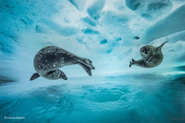 Swim gym,©Laurent Ballesta