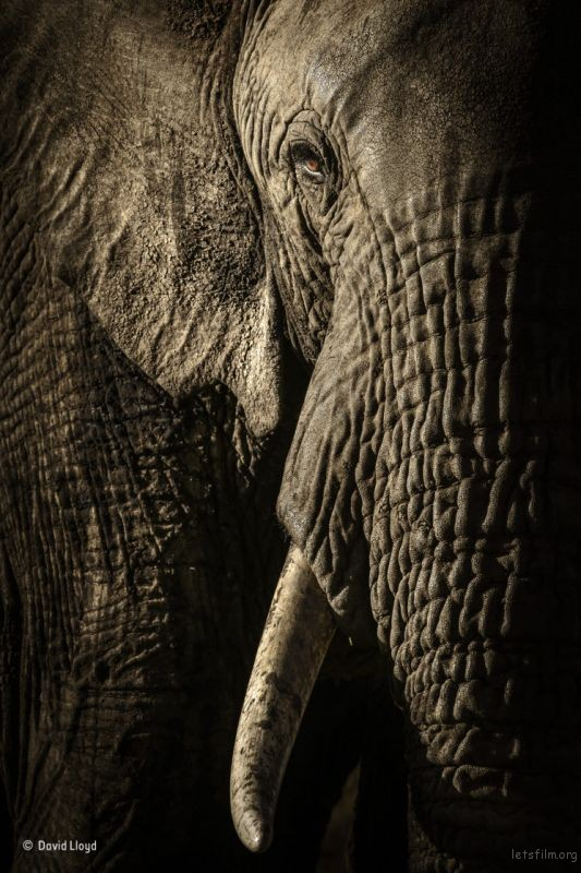 The power of the matriarch,© David Lloyd