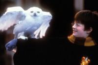 《哈利波特》20周年生日快乐!JK ROWLING细说创作的最初