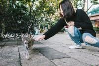 如何拍出好看的猫片?