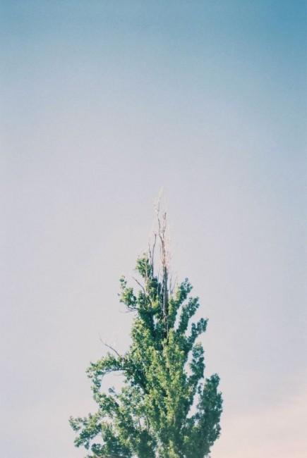 在澳洲,我拍的树,应该可以出一个专题了。因为这里的每棵树,都在用生命凹造型,