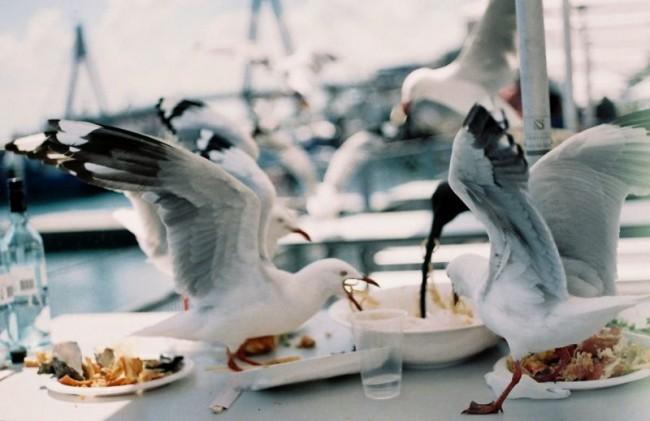 被保护的海鸥们