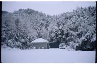 [16663] winter sweet