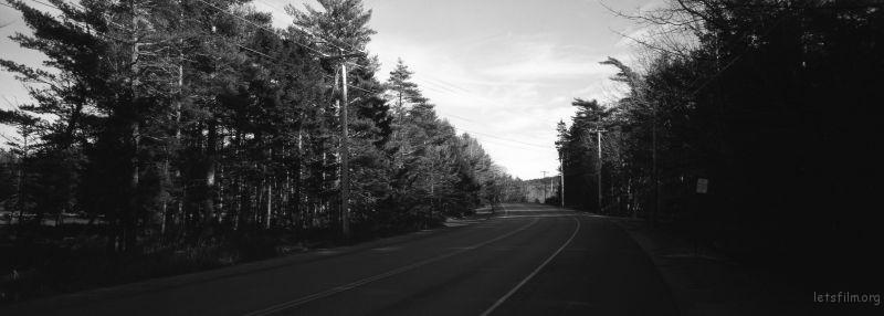 缅因Arcadia国家公园的树林