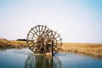 [16787] 胶片下的杭州湾湿地