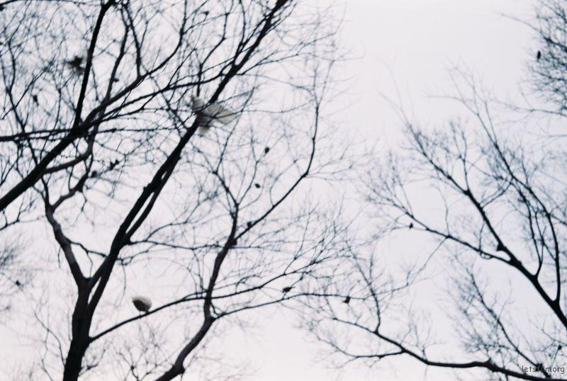"""鸽子""由福伦达BL+FUJICOLOR200拍摄; ""下过的雪""由理光GR1S+PAN400拍摄"