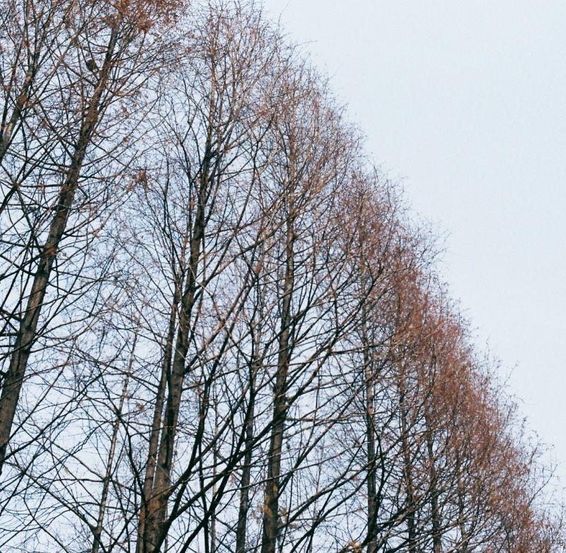 笔直的树腰