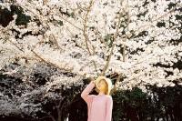 [17629] 邂逅樱花