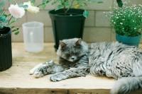 [17399] 二貓的慢生活
