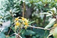 [17632] 温室里的花朵