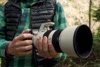 拍摄野生动物要注意的3个小贴士