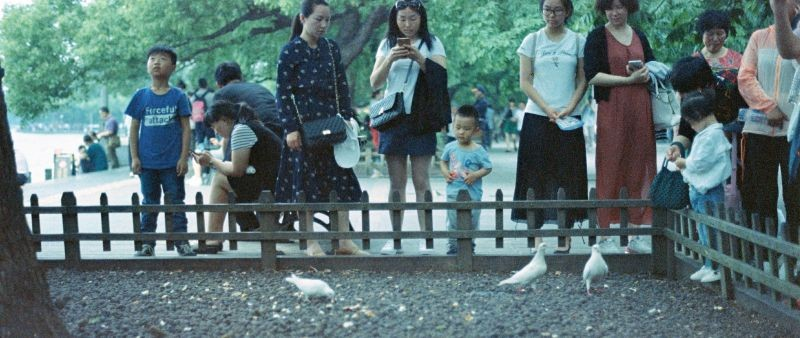 杭州的鸽子  松鼠  麻雀都不怕人的