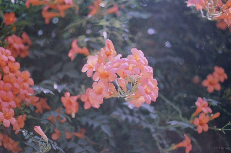 无意中拍的花  很喜欢