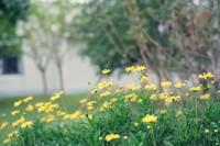 [17989] 草木繁茂