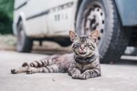 虽说撸猫丧志,但还是喜欢拍猫片儿啊
