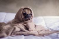 怎么样给家里的狗狗拍出好看的照片?