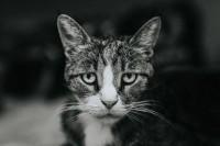 如何拍出一张出色的黑白肖像
